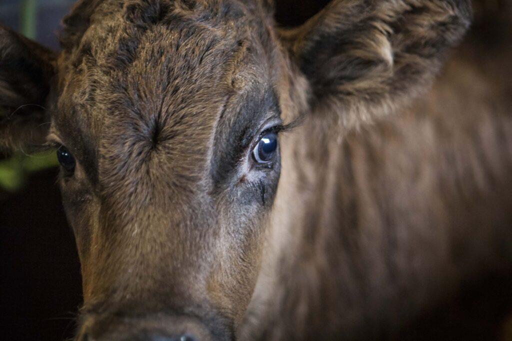 Nuestra experiencia en Nutrición Animal
