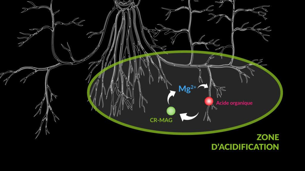 Libération contrôlée du Magnésium en fonction des besoins de la plante