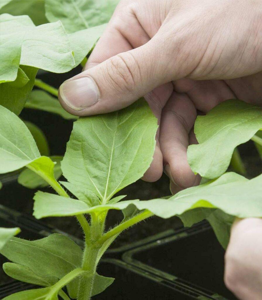 Notre gamme pour la nutrition végétale